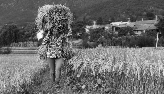 chinese countryside villager field